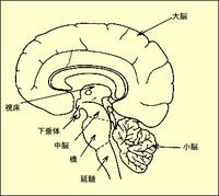 brain.jpgのサムネール画像