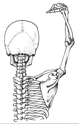 shoulder blade.jpg